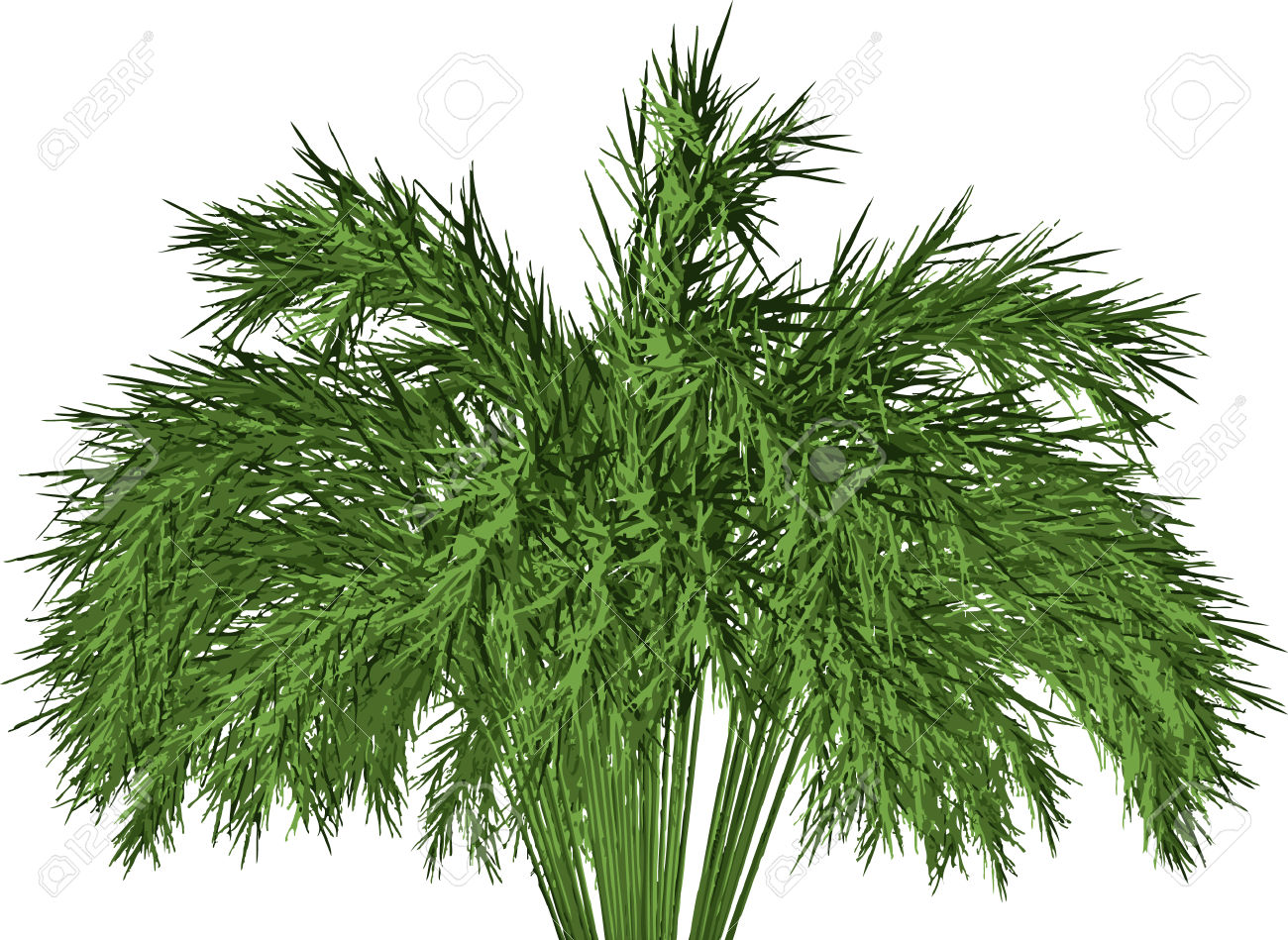 Giant Timber Bamboo: Phyllostachys Royalty Free Cliparts, Vectors.