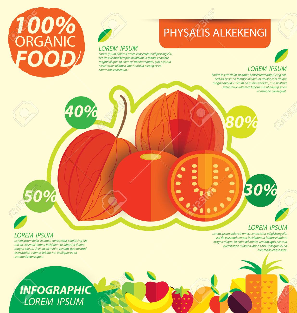 Physalis Alkekengi. Infographic Template. Vector Illustration.