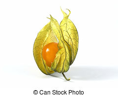 Physalis Images and Stock Photos. 4,545 Physalis photography and.