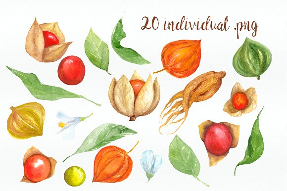 Watercolor Physalis Clip Art ~ Objects on Creative Market.