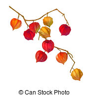 Physalis Illustrations and Clip Art. 127 Physalis royalty free.