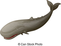 Vector Clip Art of Sperm whale or Physeter macrocephalus, marine.