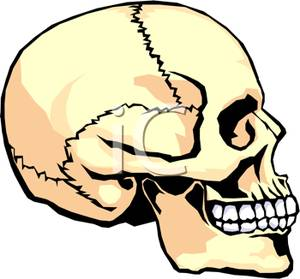 Physiology 20clipart.