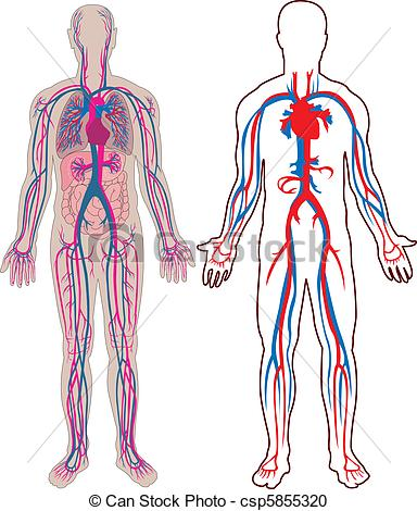 Physiology clipart - Clipground