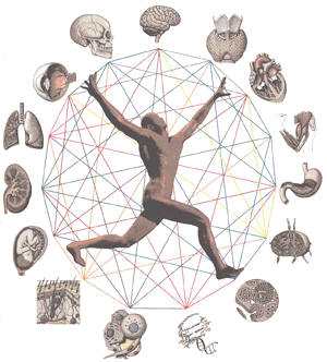 Anatomy And Physiology Clipart Free.