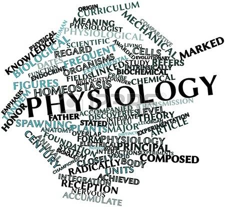 15,240 Physiology Stock Illustrations, Cliparts And Royalty Free.
