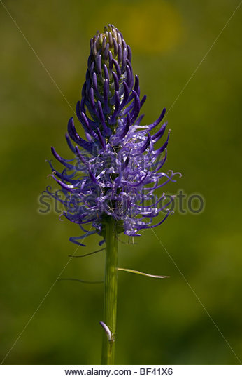 Endemic Flowers Stock Photos & Endemic Flowers Stock Images.