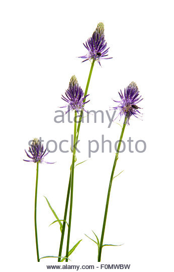 Dicotyledon Cut Out Stock Images & Pictures.