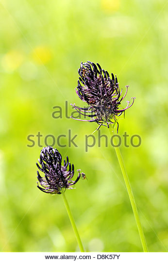 Wundheilung Stock Photos & Wundheilung Stock Images.