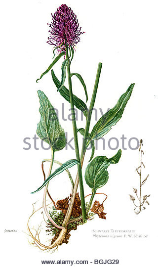 Twigs Branches Illustration Stock Photos & Twigs Branches.