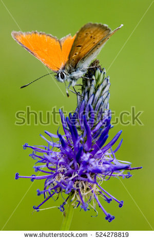 """butterfly Beautyful"" Stock Photos, Royalty."