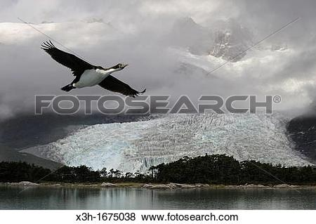 Pictures of Pia Glacier, Cordillera Darwin, Beagle Channel.