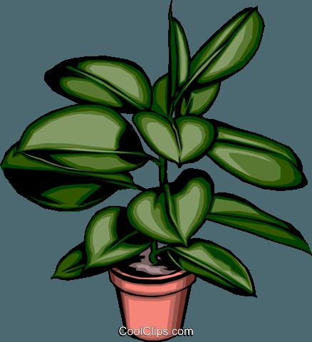 Vaso pianta immagini grafiche vettoriali clipart.