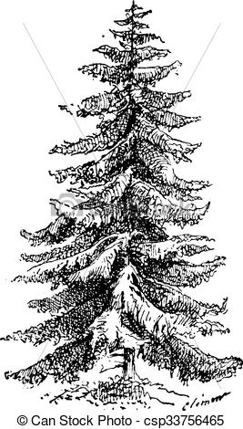 Clip Art Vector of Norway Spruce or Picea abies vintage engraving.