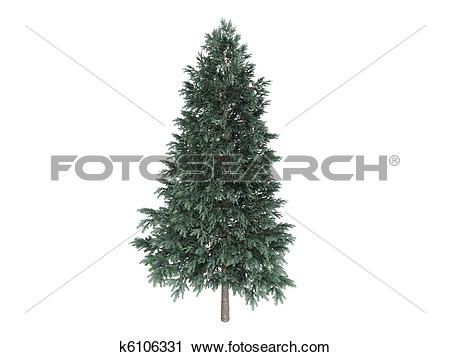 Clipart of Spruce or Picea abies k6106331.