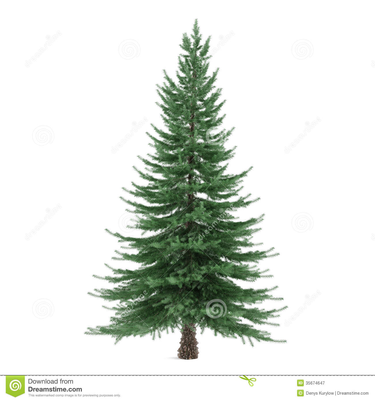 Picea Stock Photos, Images, & Pictures.