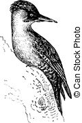 Picidae Clip Art Vector and Illustration. 11 Picidae clipart.