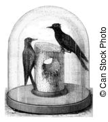 Picidae Illustrations and Clipart. 12 Picidae royalty free.