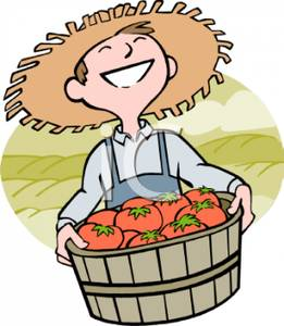Farmer Holding a Barrel of Freshly Picked Tomatoes.