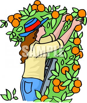 Picking Vegetables Clipart.