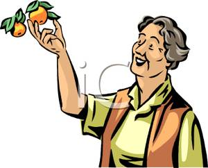 Gallery For > Fruit Picker Clipart.