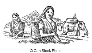 Tea pickers Vector Clipart Illustrations. 43 Tea pickers clip art.