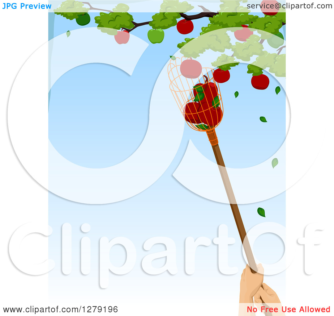 Clipart of a Worker Using a Fruit Picker to Grab Apples from a.