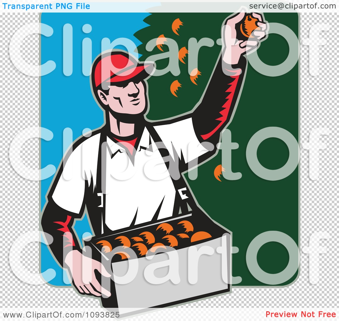 Clipart Retro Male Fruit Picker Picking Oranges From A Tree.