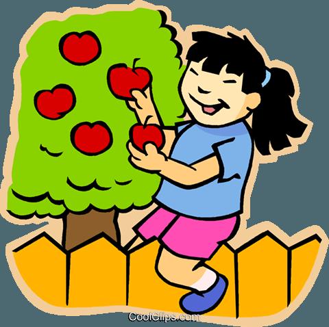 girl picking apples Royalty Free Vector Clip Art.