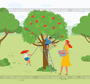 Apple Tree Woman Picking Fruits Kid Playing.