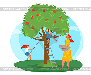 Apple Tree Woman Picking Fruits Kid Playing.