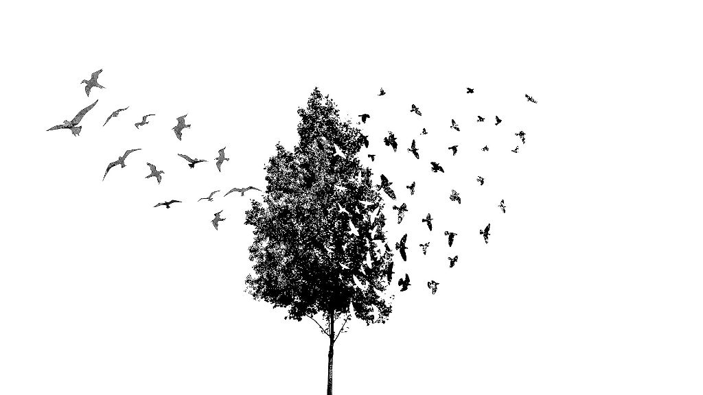 tree bird blackandwhite clipart.