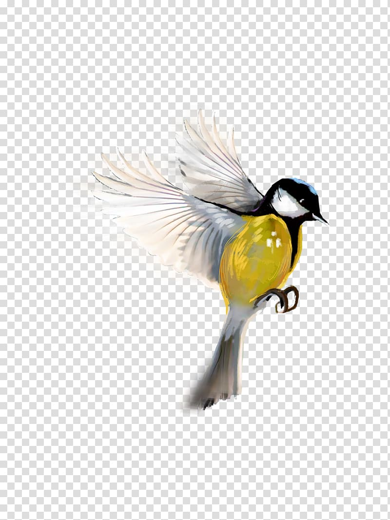 Bird PicsArt Studio editing, awesome transparent background.