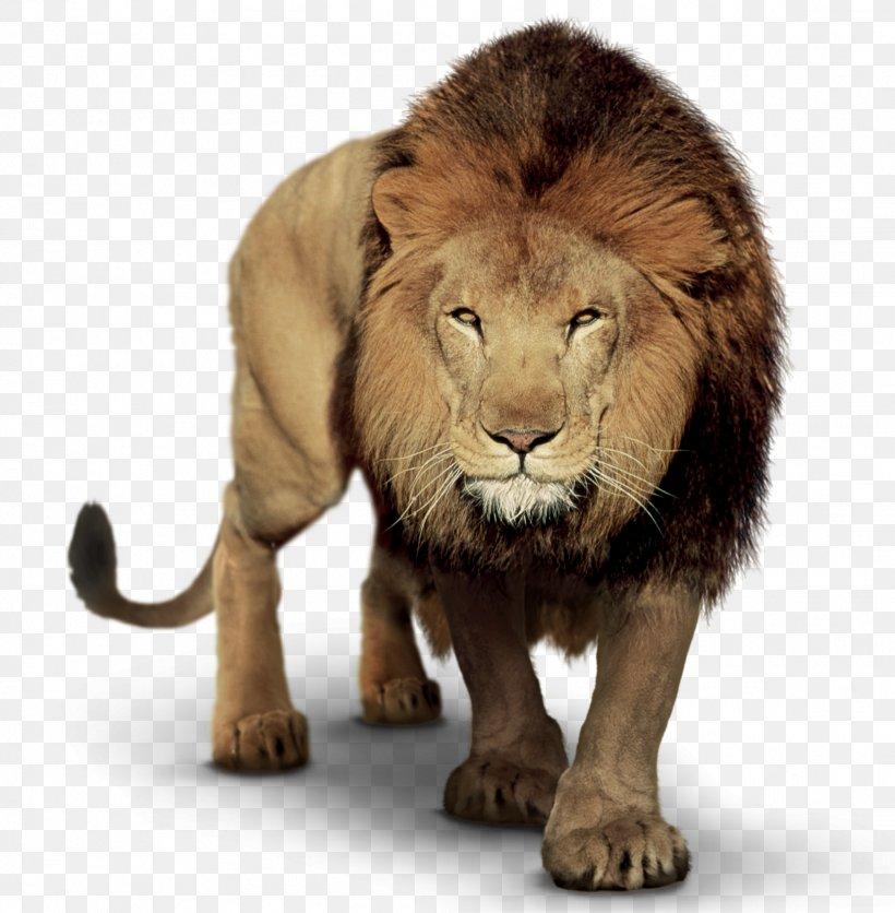 Lion Clip Art Image PicsArt Photo Studio, PNG, 1623x1656px.
