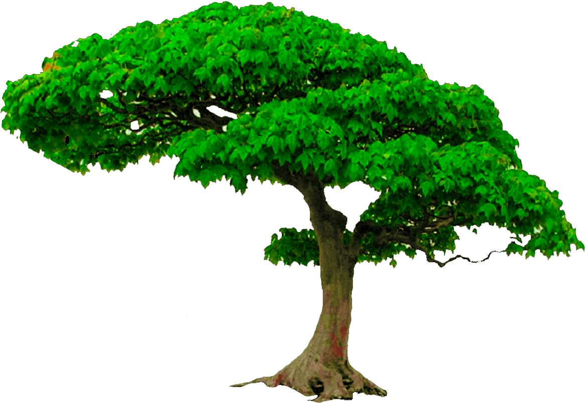 Download All New Tree Png Zip File, Photoshop Editing Png.