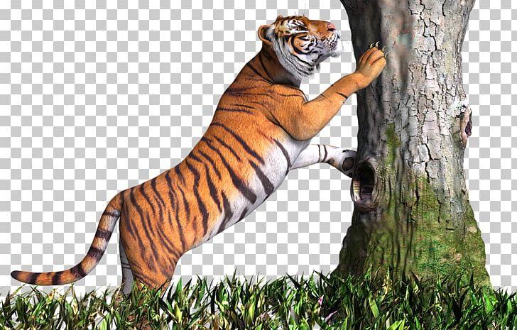 Desktop PicsArt Photo Studio Lion White Tiger PNG, Clipart.