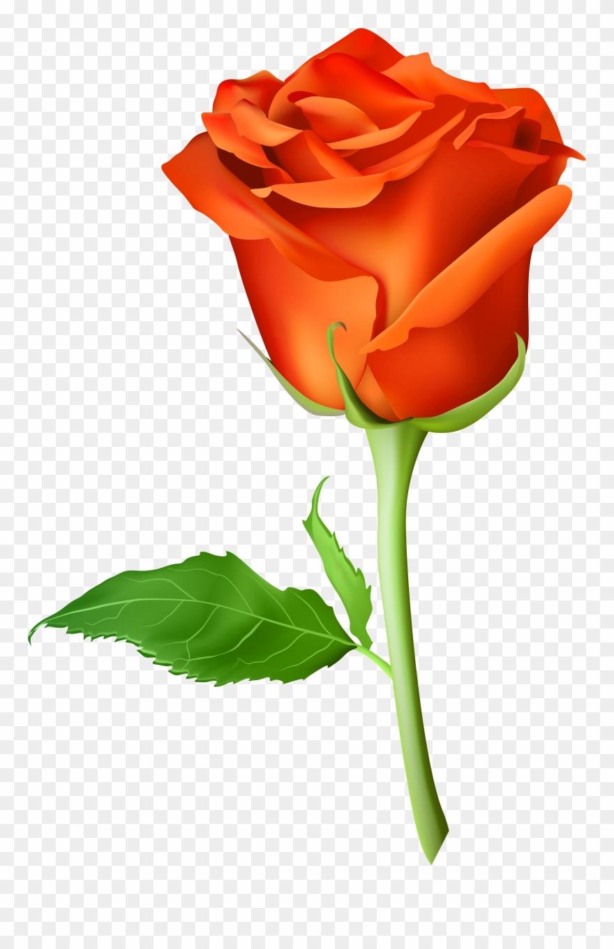 Picsart Rose Png Hd Clipart (#843804).