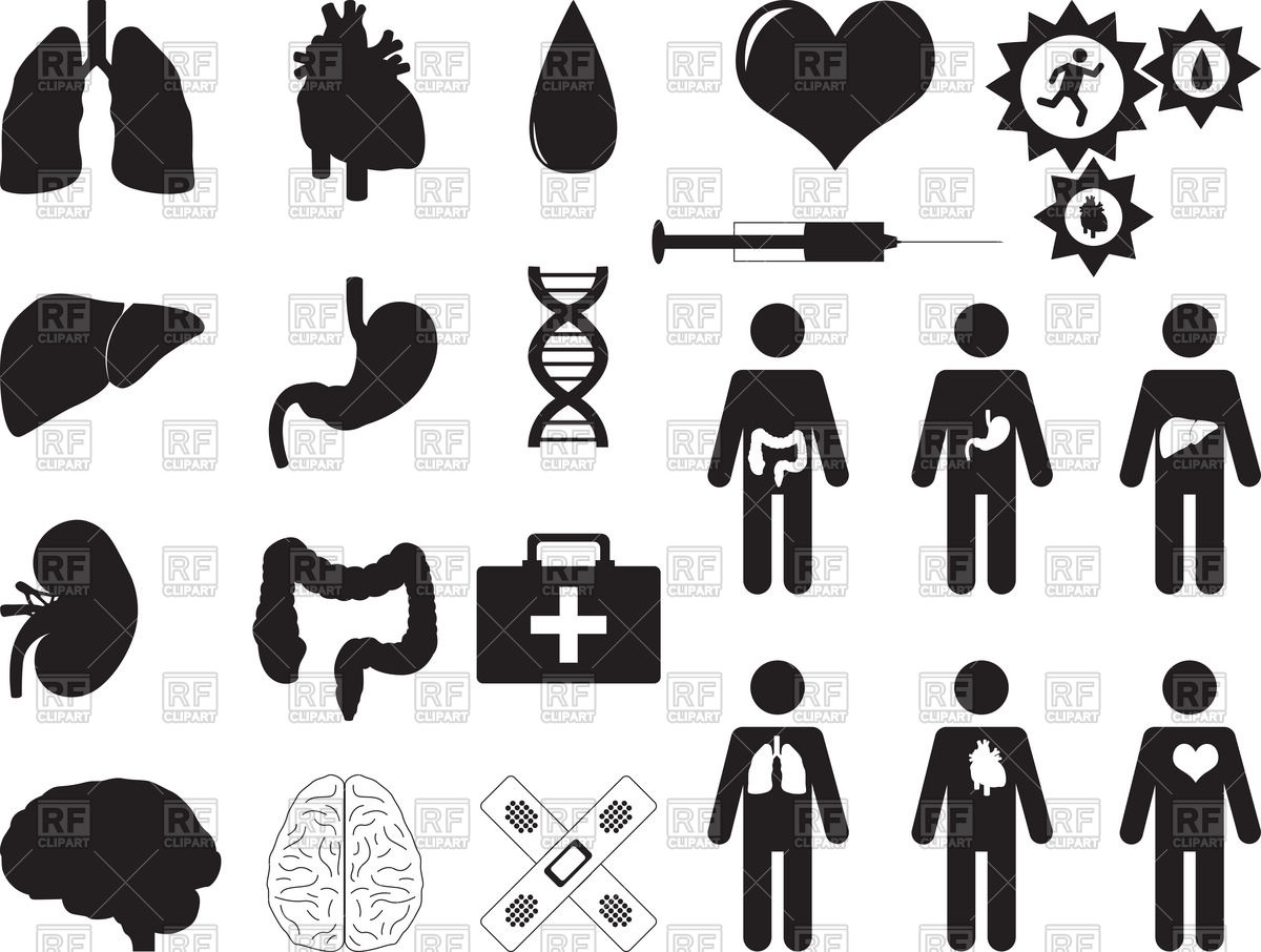 Pictograms of human organs and medical tools Vector Image #39960.