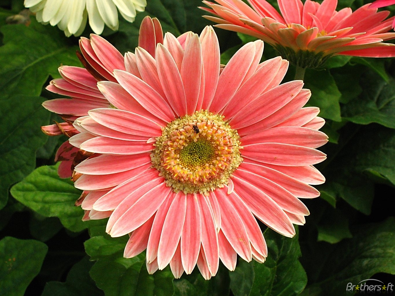 Flowers High Definition Wallpapers Free Download.