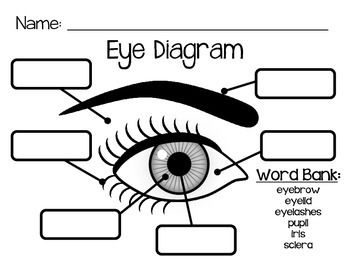 17 Best ideas about Human Eye Diagram on Pinterest.