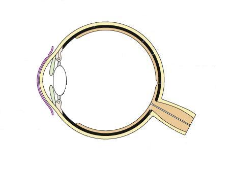 Picture Front Of The Eye Without Labels Clipart on Unlabeled Eye Diagram Basic