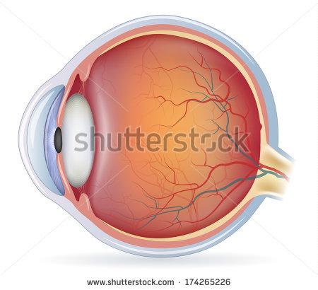 Human Eye Stock Images, Royalty.