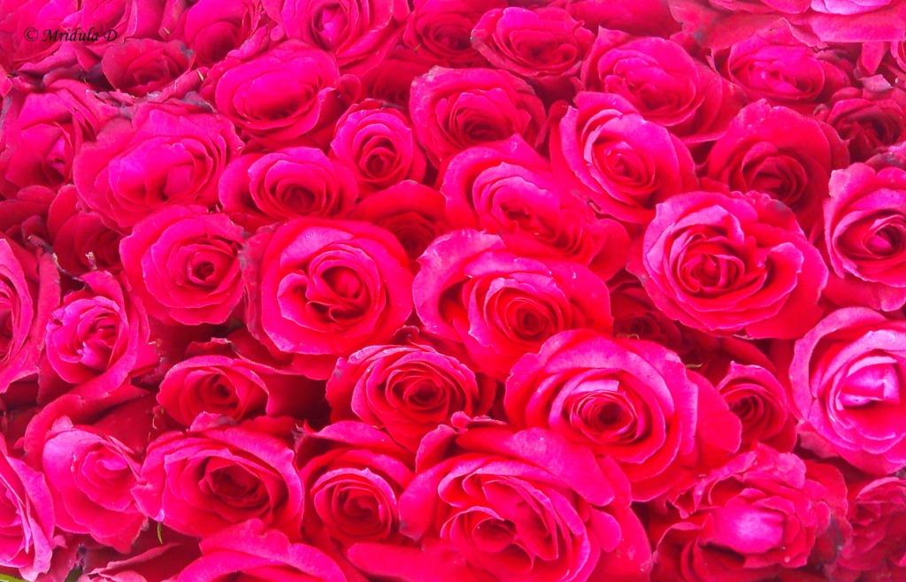 Friday Flowers.