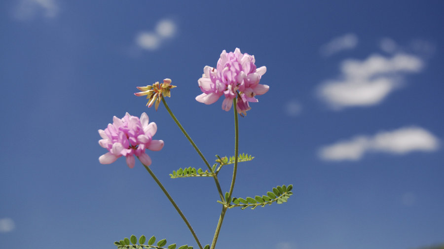 Jazz In Bloom: May Flowers : NPR.
