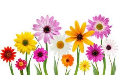 May Flowers Free Clipart Images.