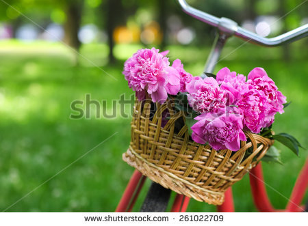May Flowers Stock Images, Royalty.