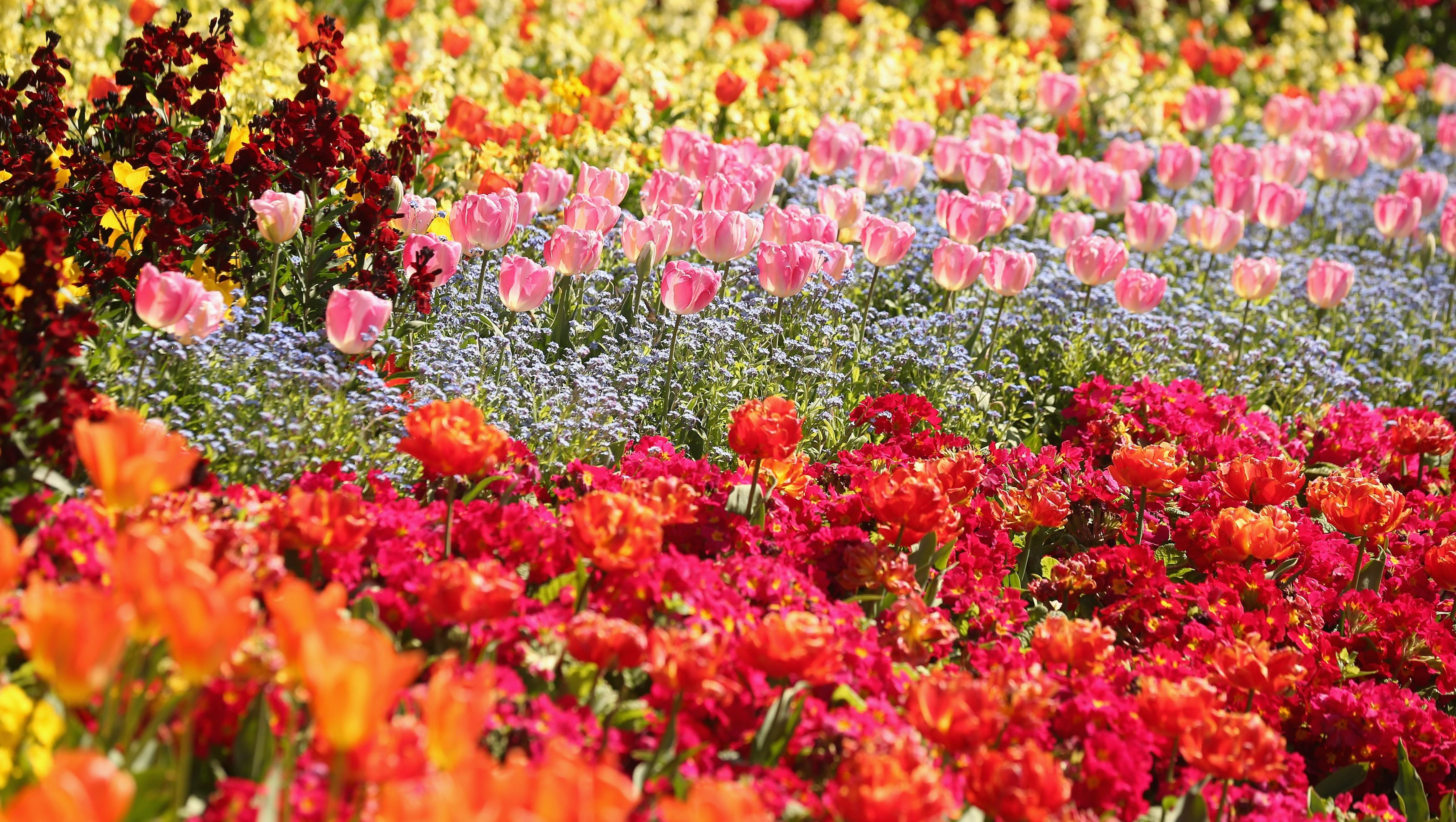 MAY FLOWERS: Stock up Extravaganza!.
