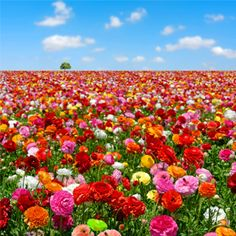 Picture Of May Flowers.