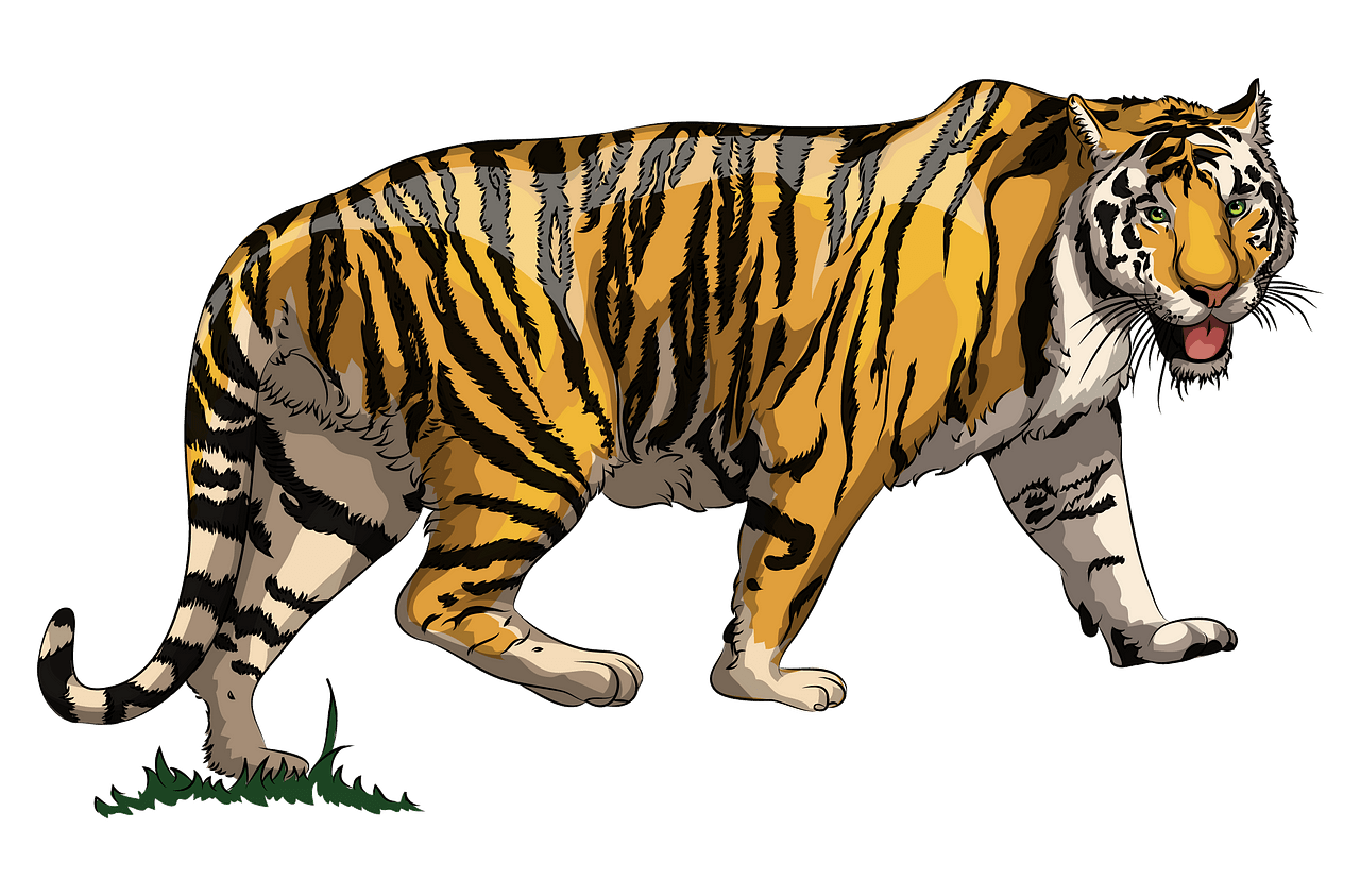 Tiger clipart. Free download..