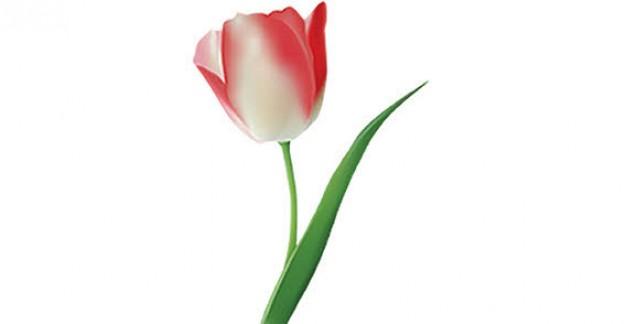 Single Tulip Clipart.